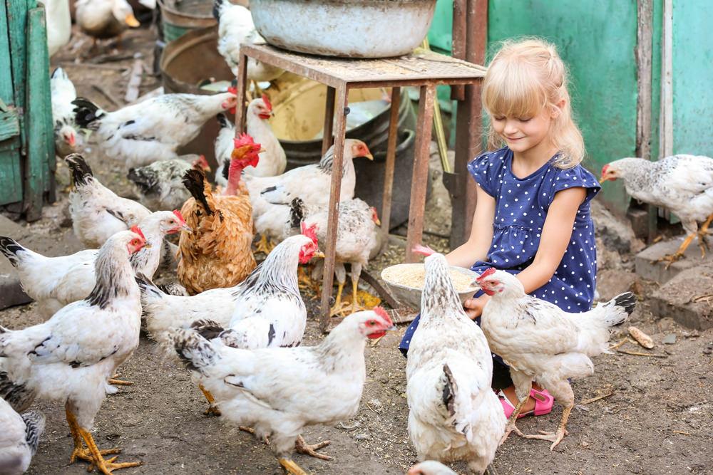 Einblick in die landwirtschaftliche Lebens- und Arbeitswelt